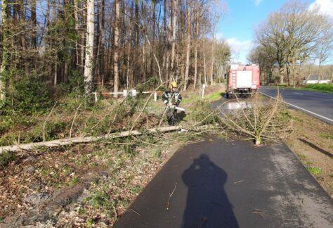 Feuerwehr Börger beseitigt Bäume auf Landstraße